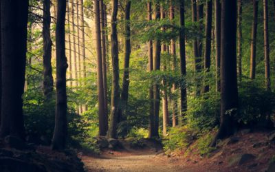 «Protection de l'environnement, patrimoine commun des êtres humains» : Un objectif de valeur constitutionnelle